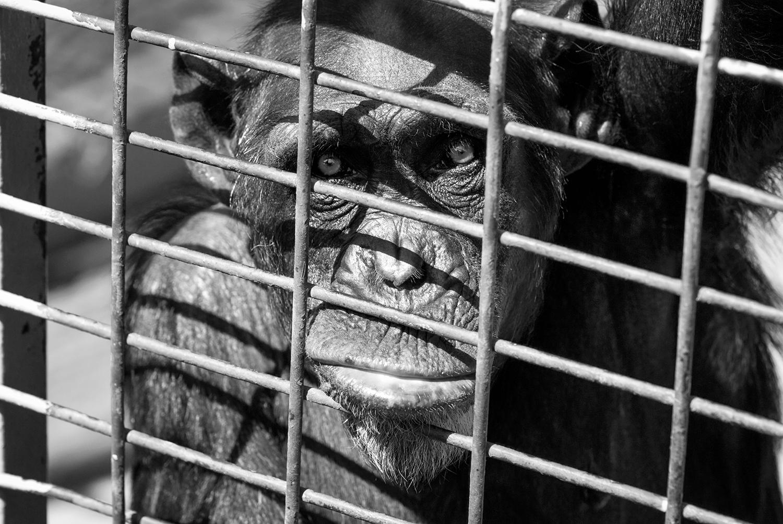 Behind bars example image 1