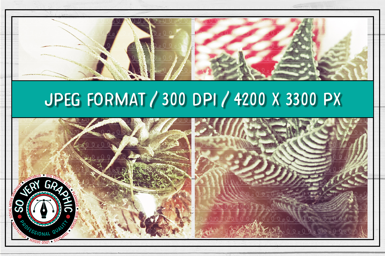 20 Vintage Succulents Holiday Styled Stock   Mock Up Bundle example image 8