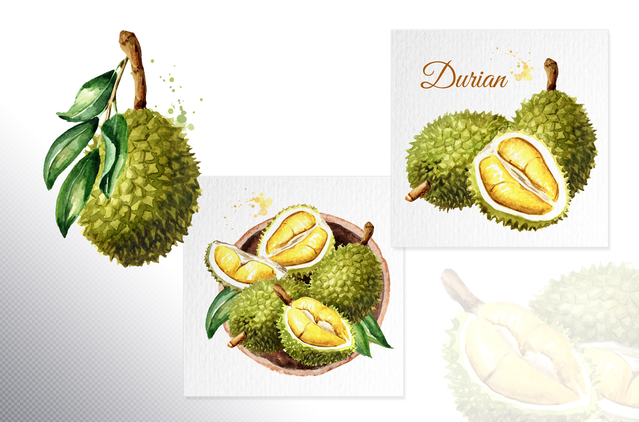 Durian. Watercolor collection example image 4