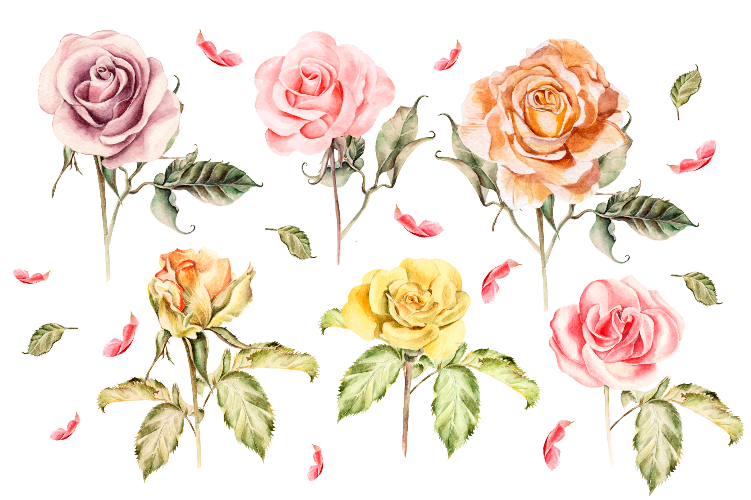 Hand drawn watercolor roses example image 3