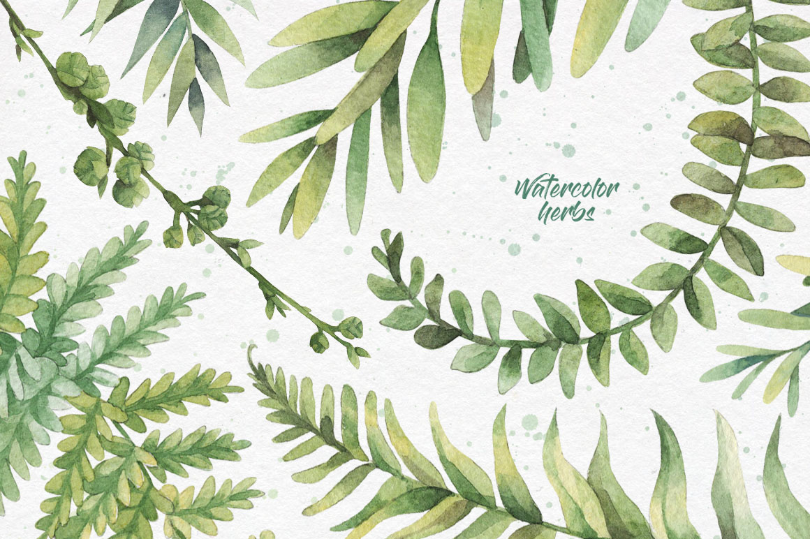 Watercolor herbs. Clipart collection example image 2