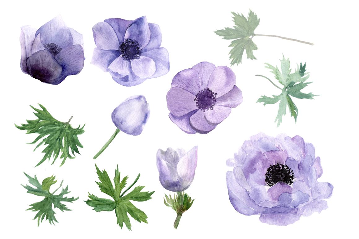 Purple Anemone Watercolor Clip Art Set + Wreath example image 2
