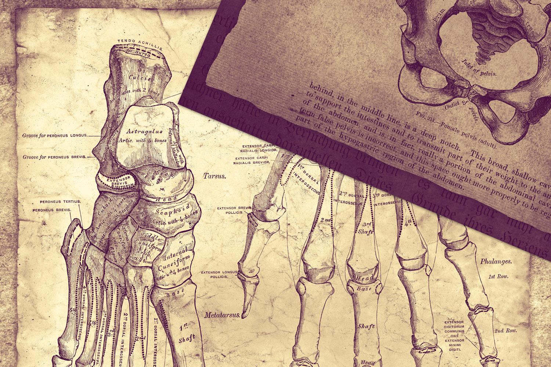 Clandestine Anatomy Digital Paper example image 3