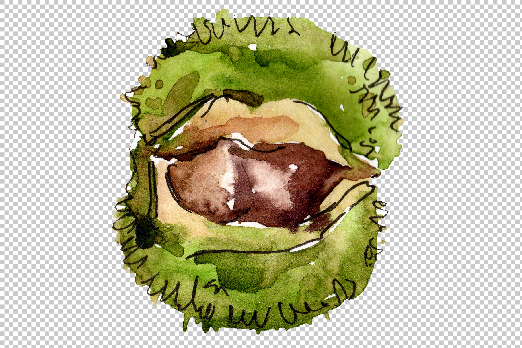 Autumn chestnut PNG watercolor plant set example image 5