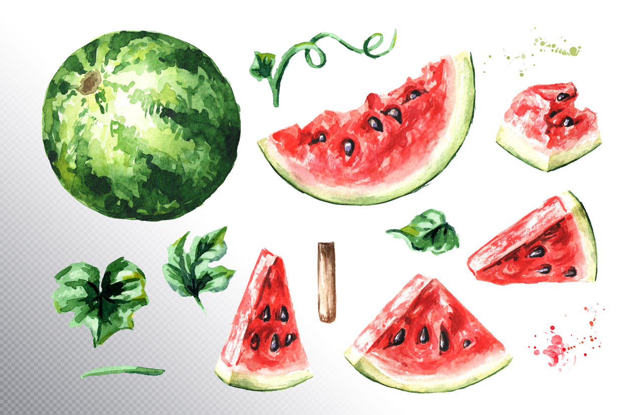 Watermelon. Watercolor collection example image 6