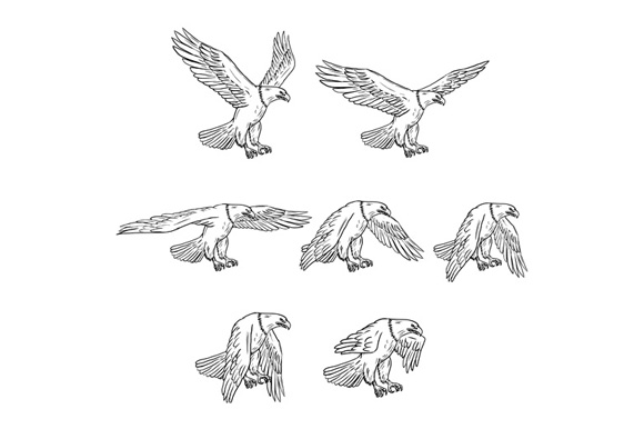Bald Eagle Flying Drawing Collection Set example image 1