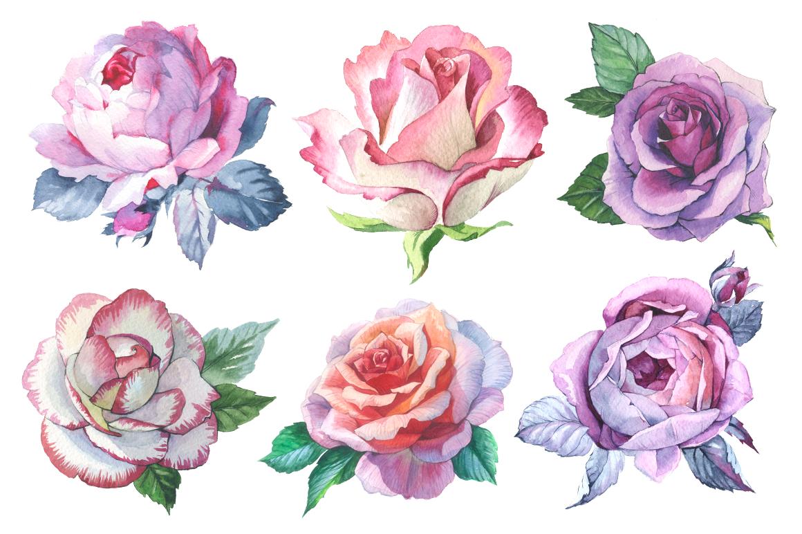 romantic set of 6 png watercolor roses design bundles