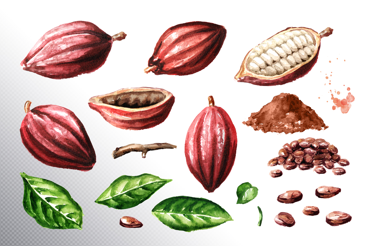 Cocoa. Watercolor collection example image 7