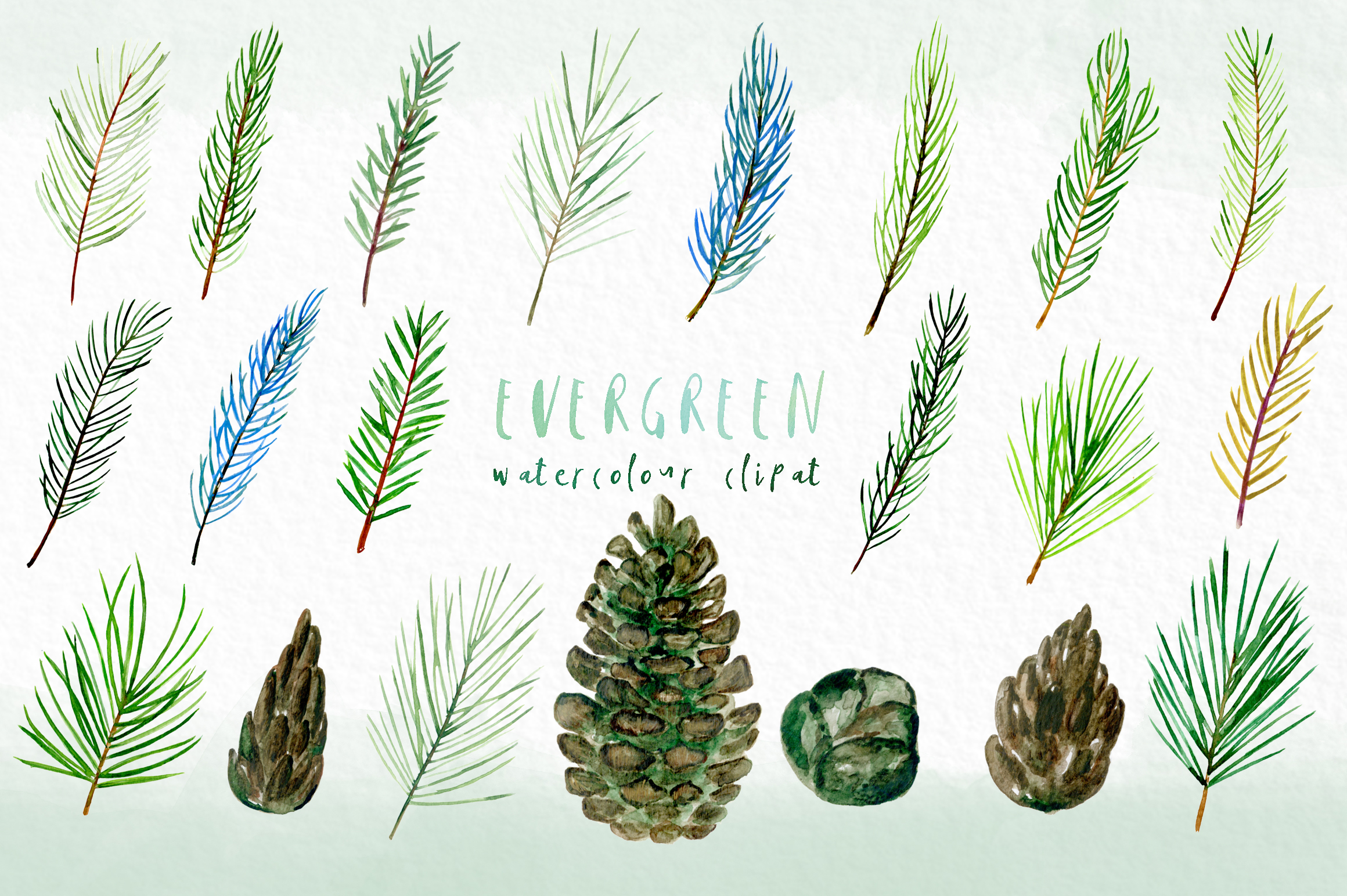 Evergreen. Watercolor clipart example image 3