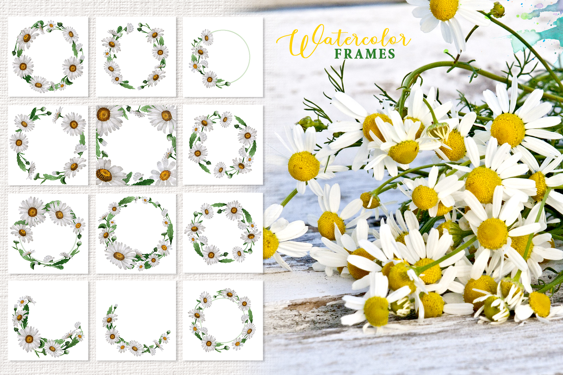 Chamomile white Watercolor png example image 2