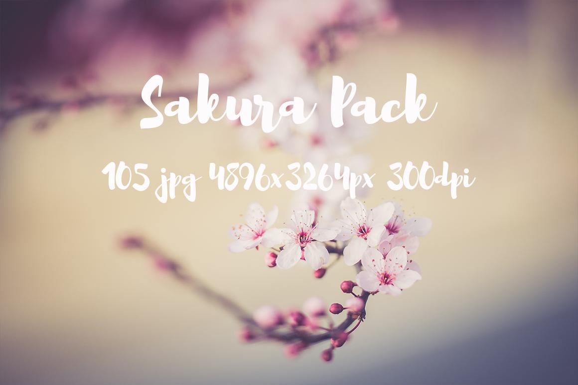 sakura photo pack example image 15