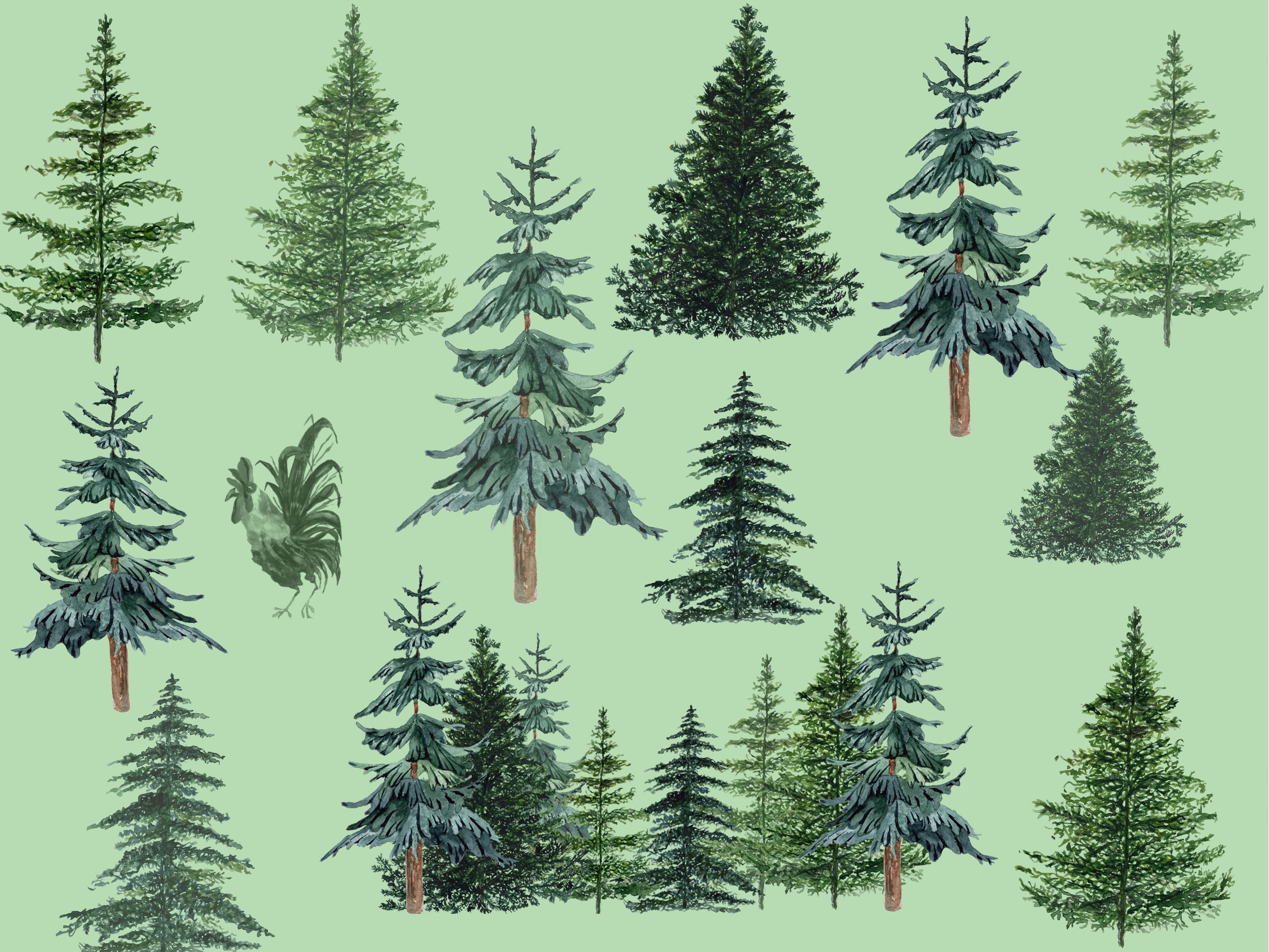 Conifers trees clipart example image 5