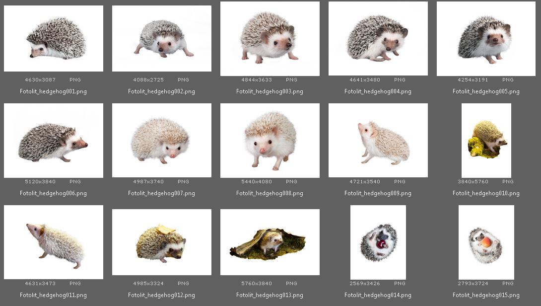 15 Hedgehog Photo Overlays example image 4