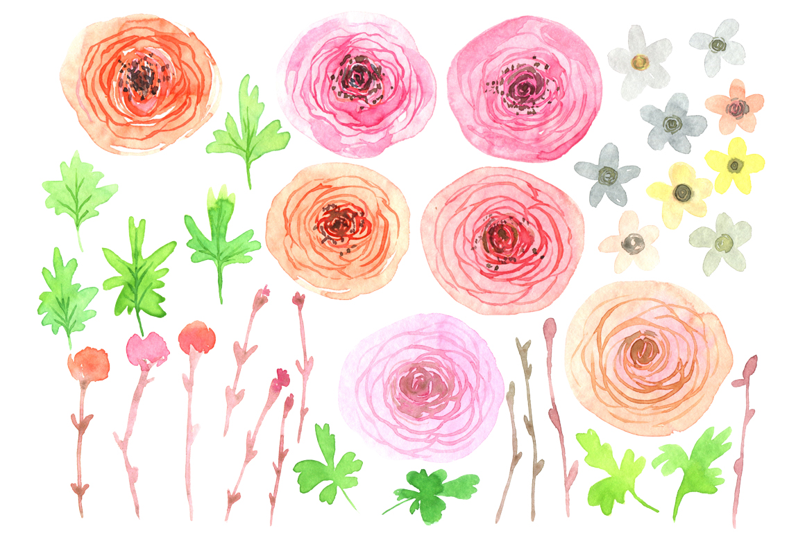 Watercolor ranunculus flowers png example image 2