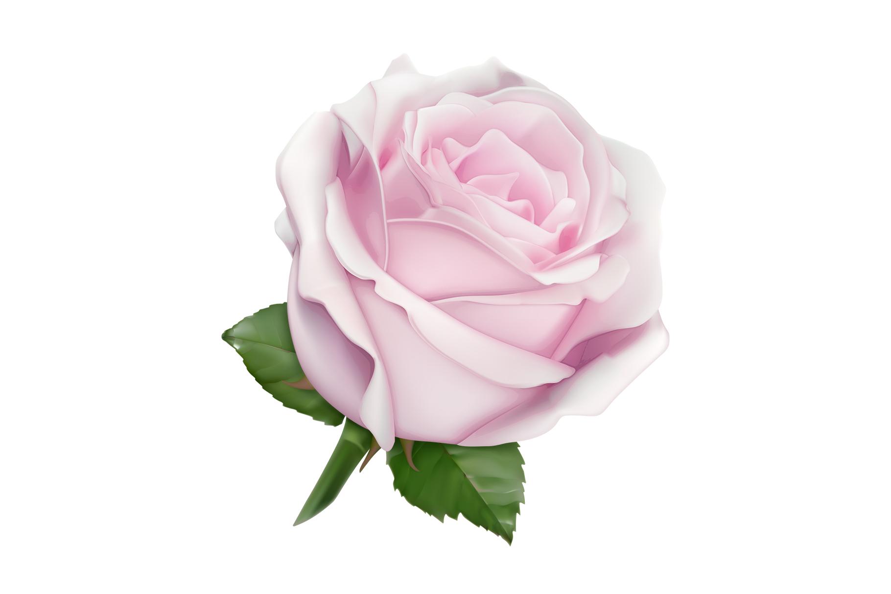 Rose, symbol of love, romantic Valentine's Day, vectors set example image 7