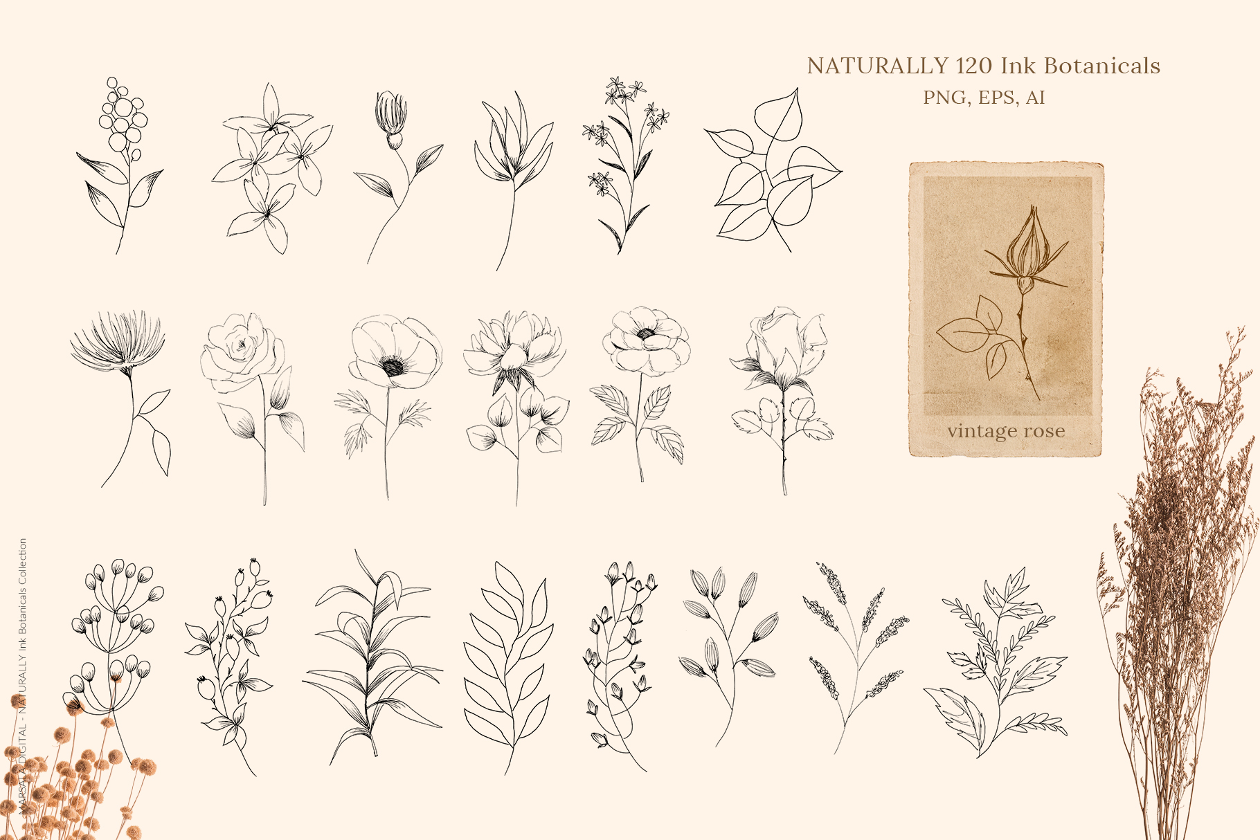 Ink Botanicals Vintage Wildflowers Ink Botanicals Vintage example image 8