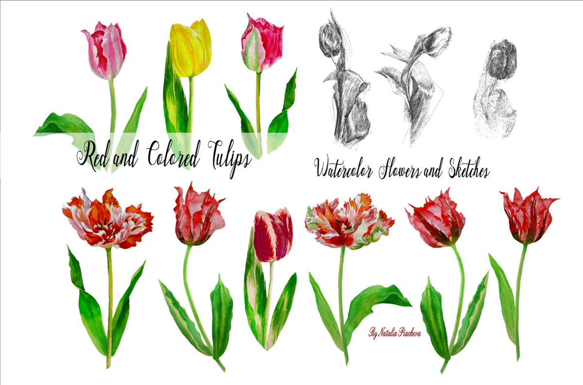 Red and Colored Tulips. Watercolor Clip Art example image 2