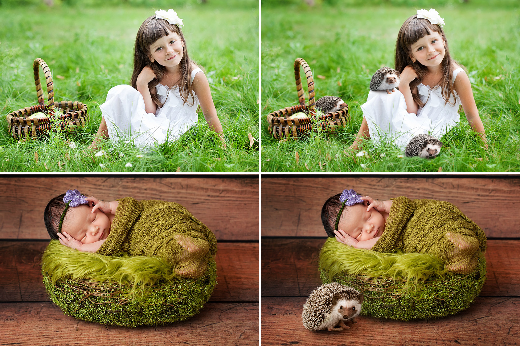 15 Hedgehog Photo Overlays example image 2