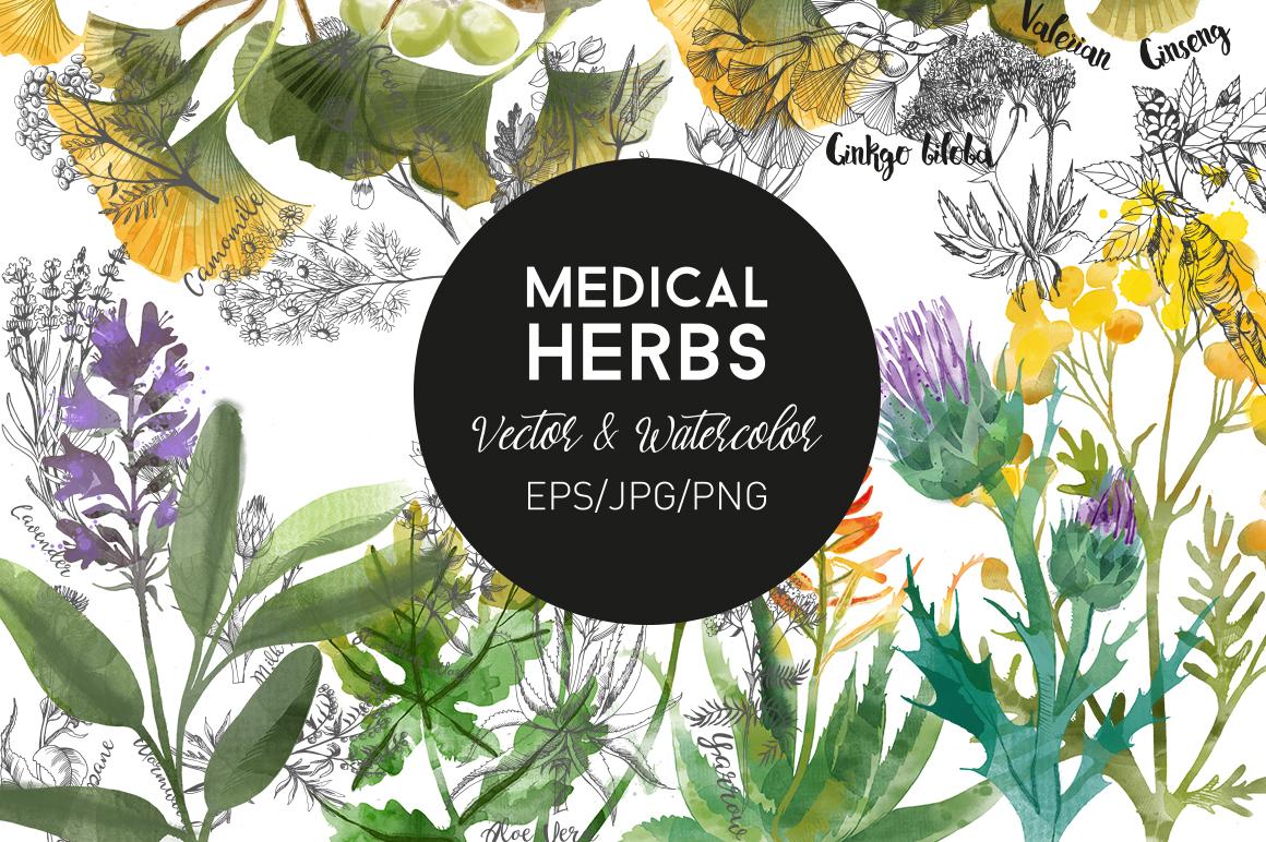 Medical Herbs. Vector & watercolor example image 1