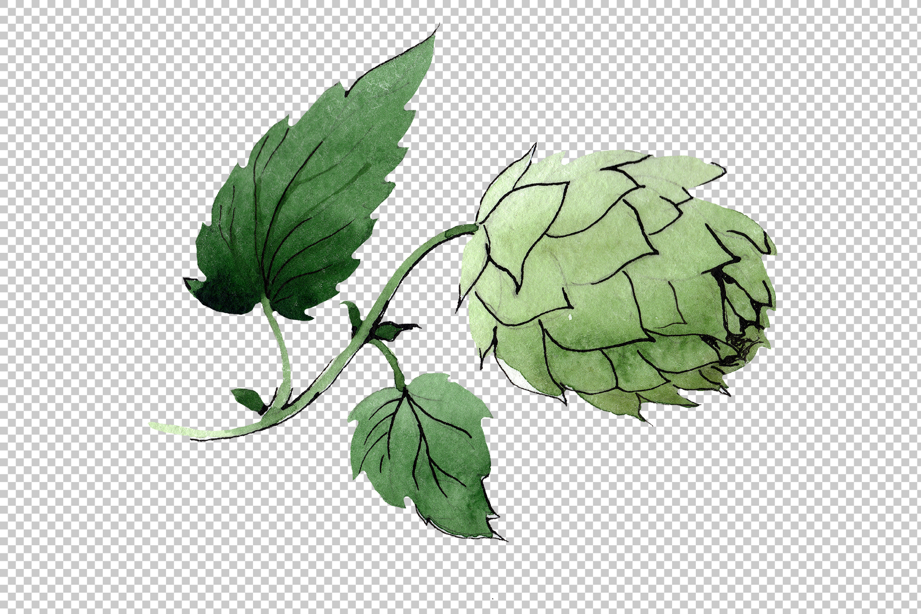 Green watercolor hops png set example image 4