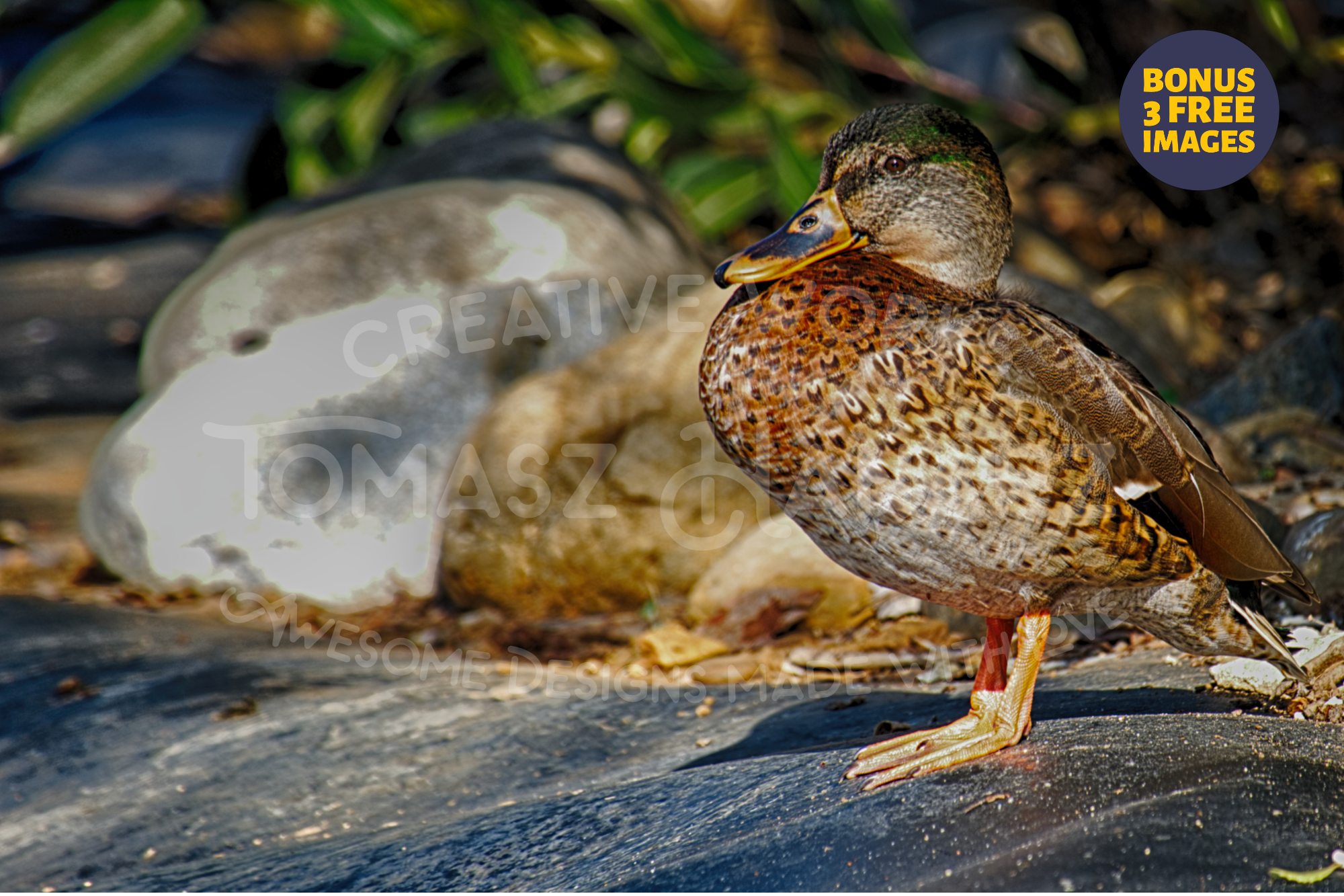 Duck In The Garden - Plus BONUS 3 FREE Images example image 1