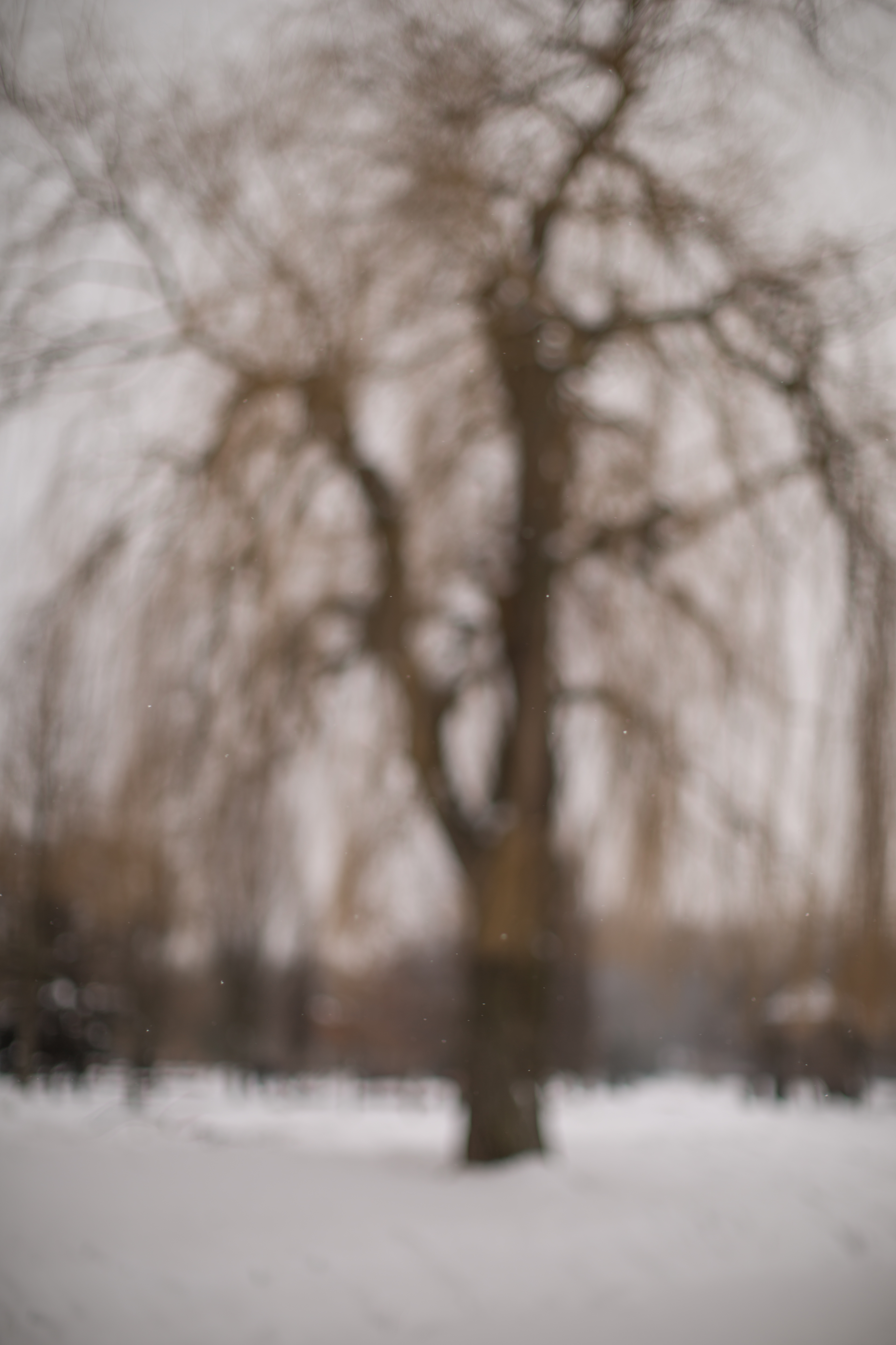 Blurred tree at winter  example image 1