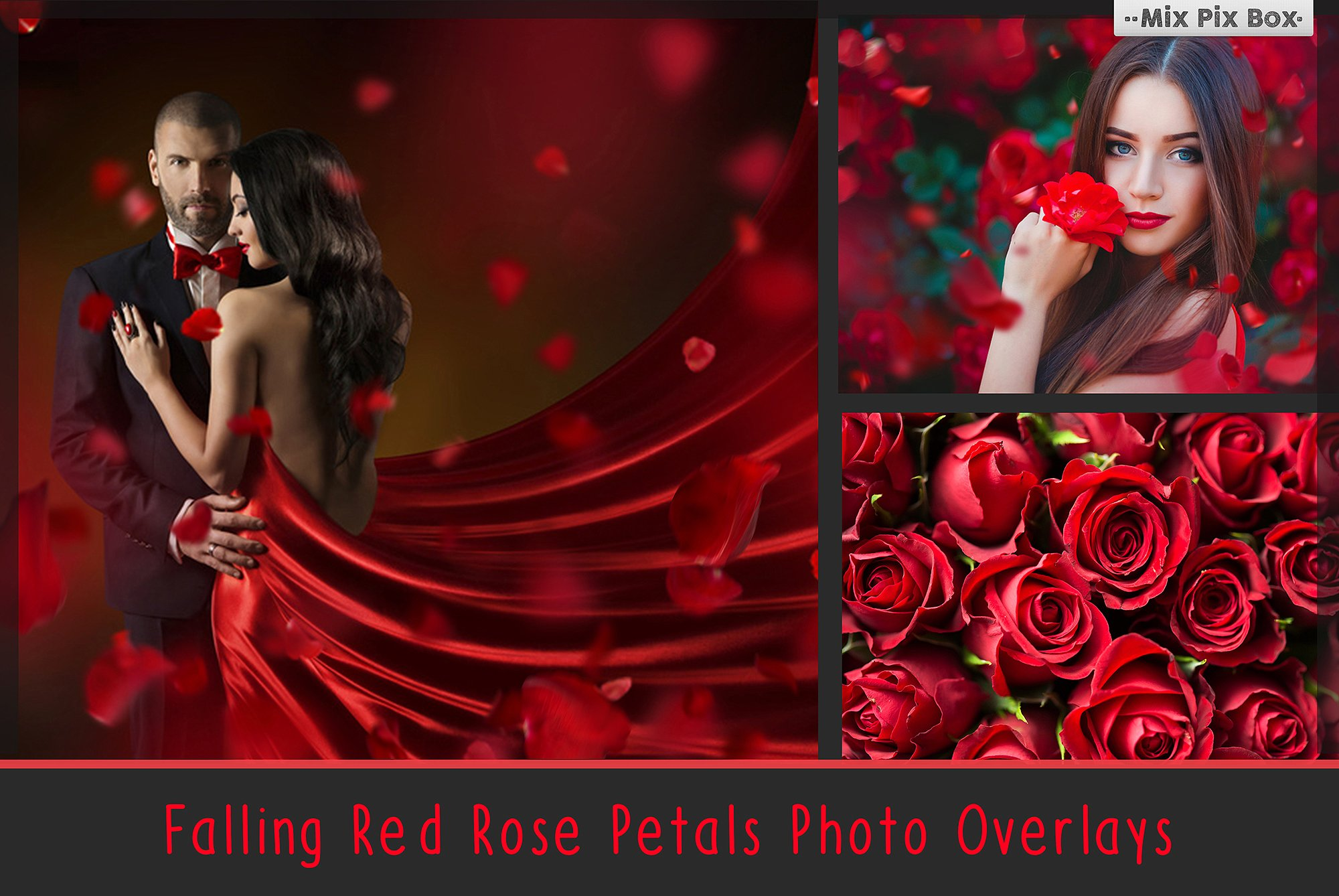 Falling Rose Petals Photo Overlays example image 1
