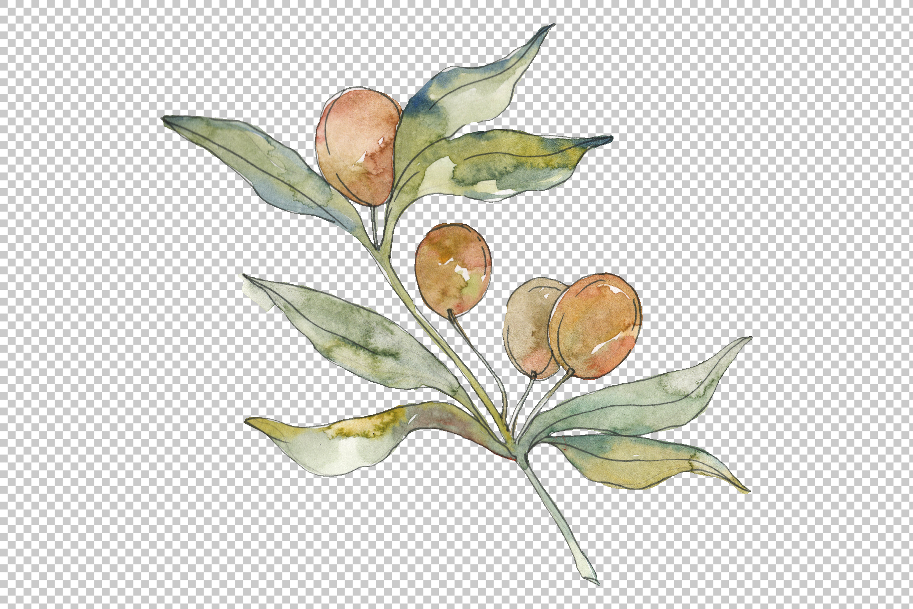 Olives Watercolor png example image 5