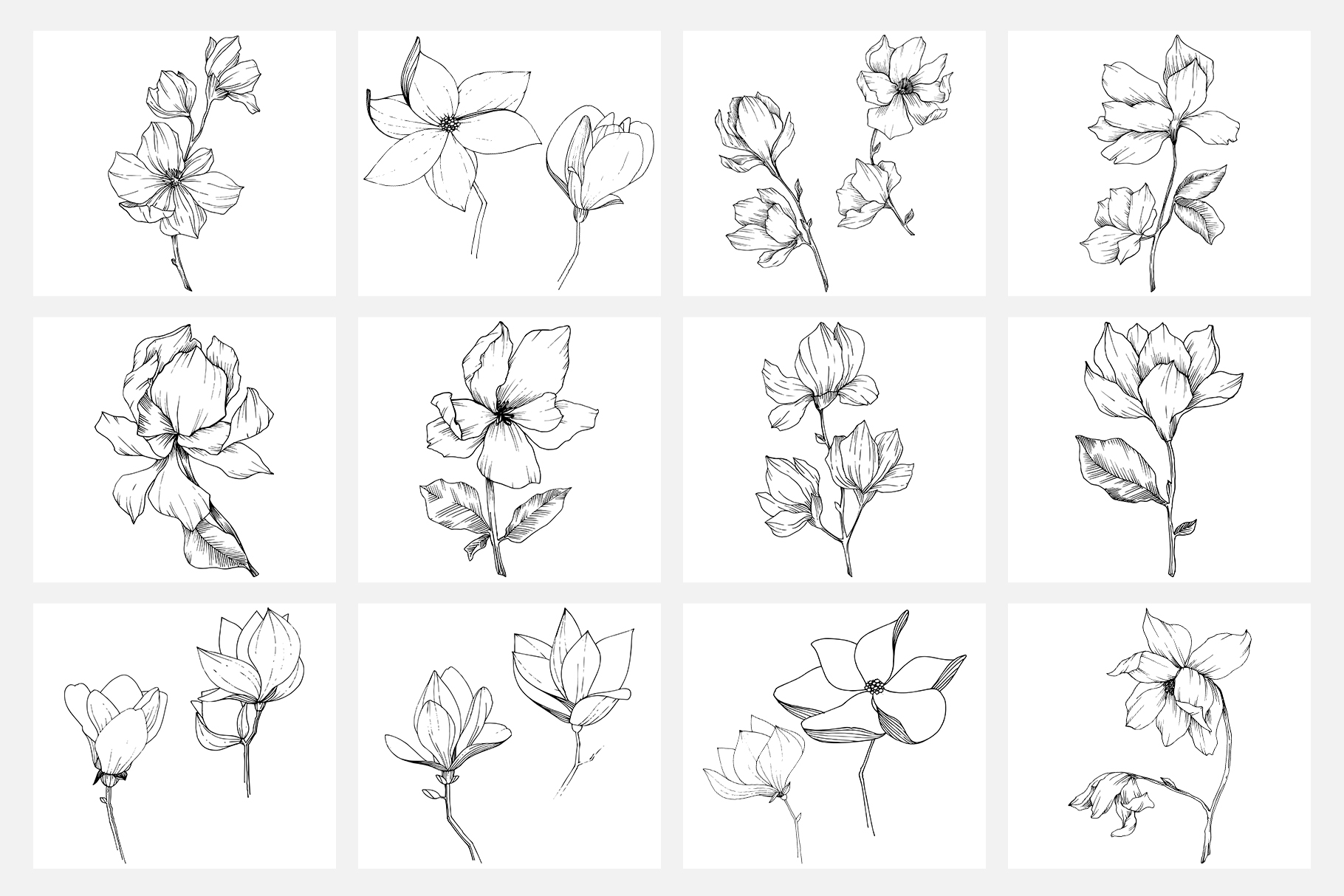 Vector illustration of Freesia flower watercolor png example image 7