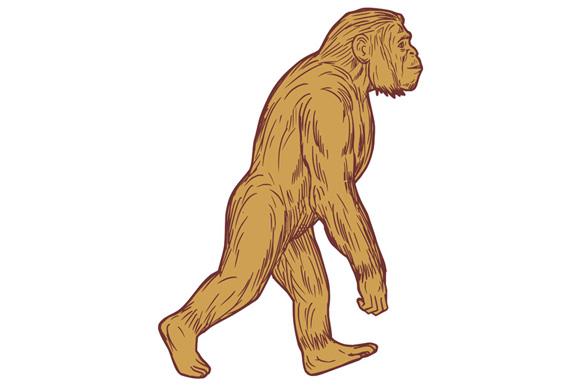 Homo Habilis Walking Side Drawing example image 1