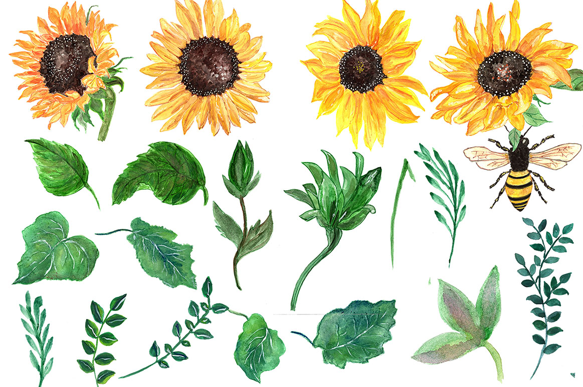 Watercolor sunflowers clipart (23348) | Illustrations ...