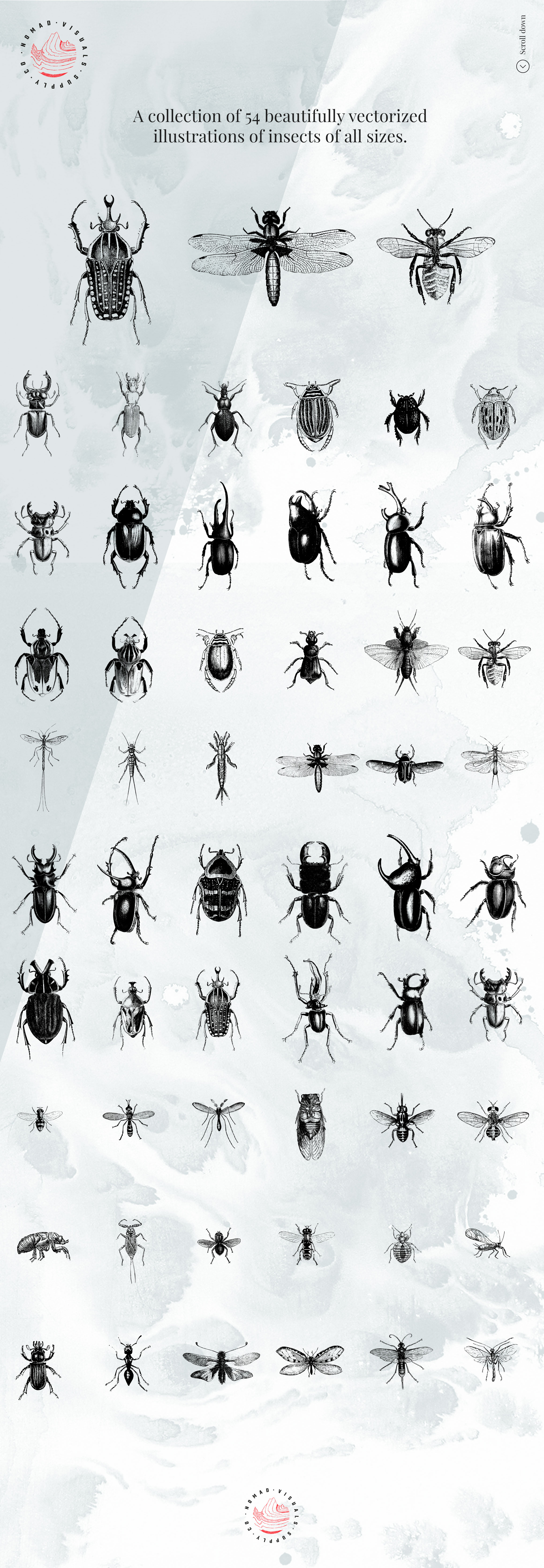Premium Insects Illustrations example image 3
