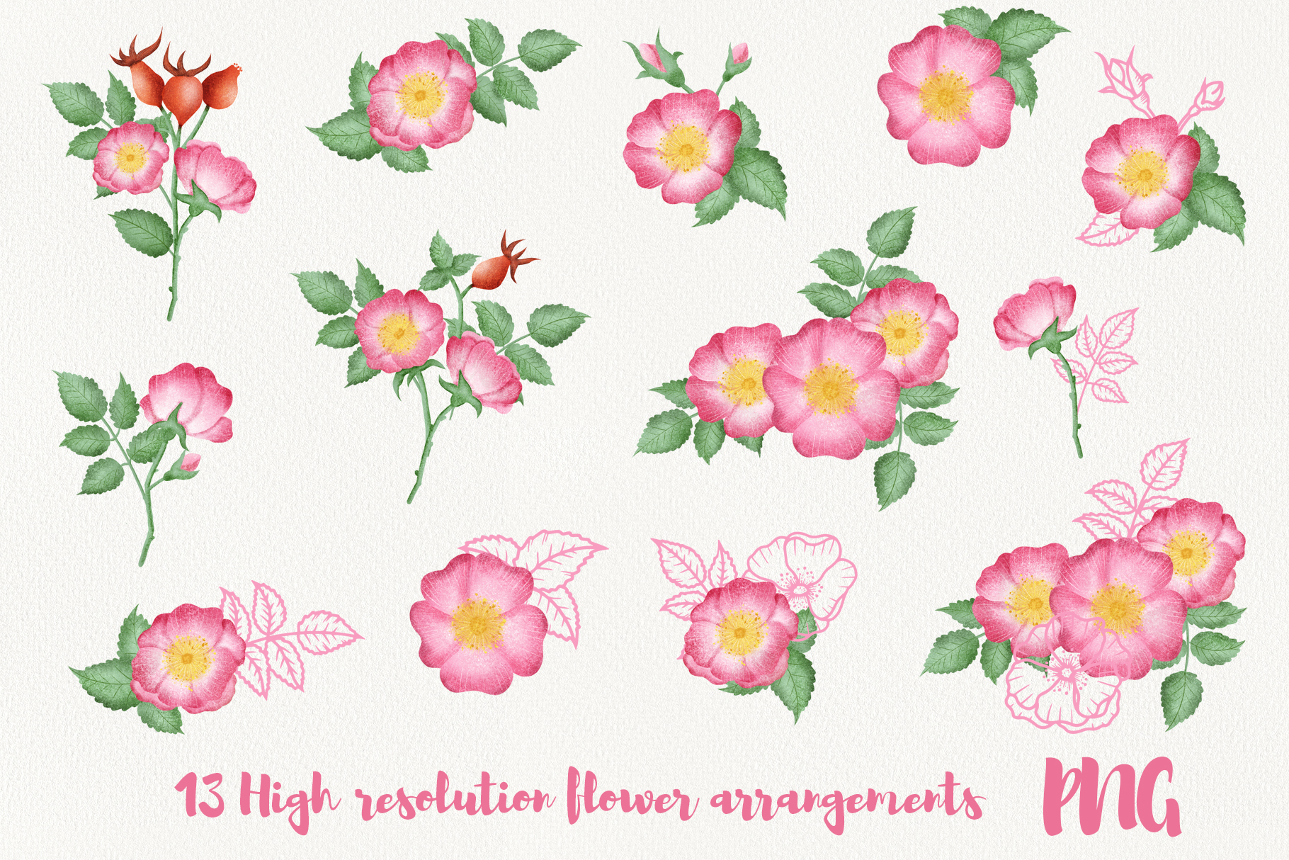 Wild Rose Clipart Rose Hip example image 4