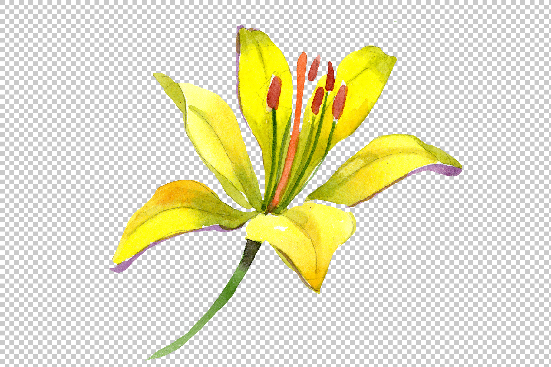Wildflower lemon lily PNG watercolor set example image 3