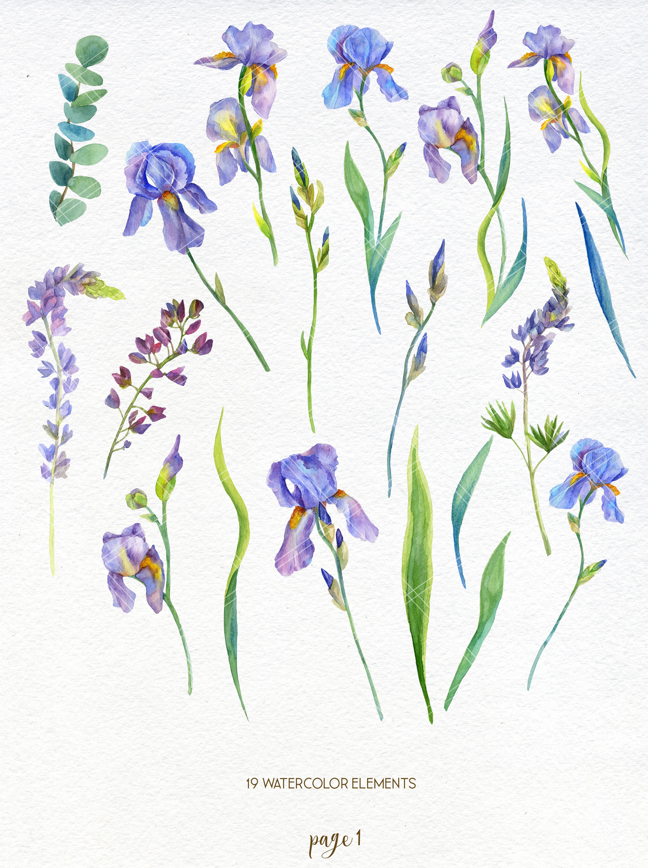 Watercolor Iris Flowers Clipart Wedding Floral Clip Art 172622