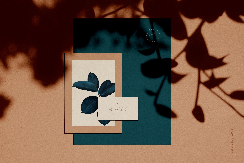 Ficus plant art & textures example image 8