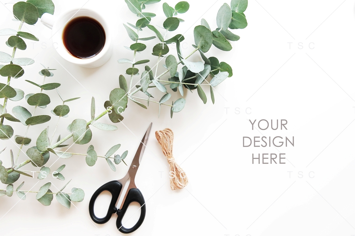 Eucalyptus Leaves and Coffee Stock Photo example image 1