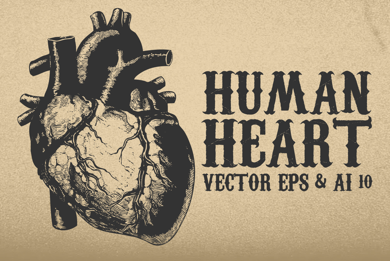Vintage Human Heart Vector example image 1