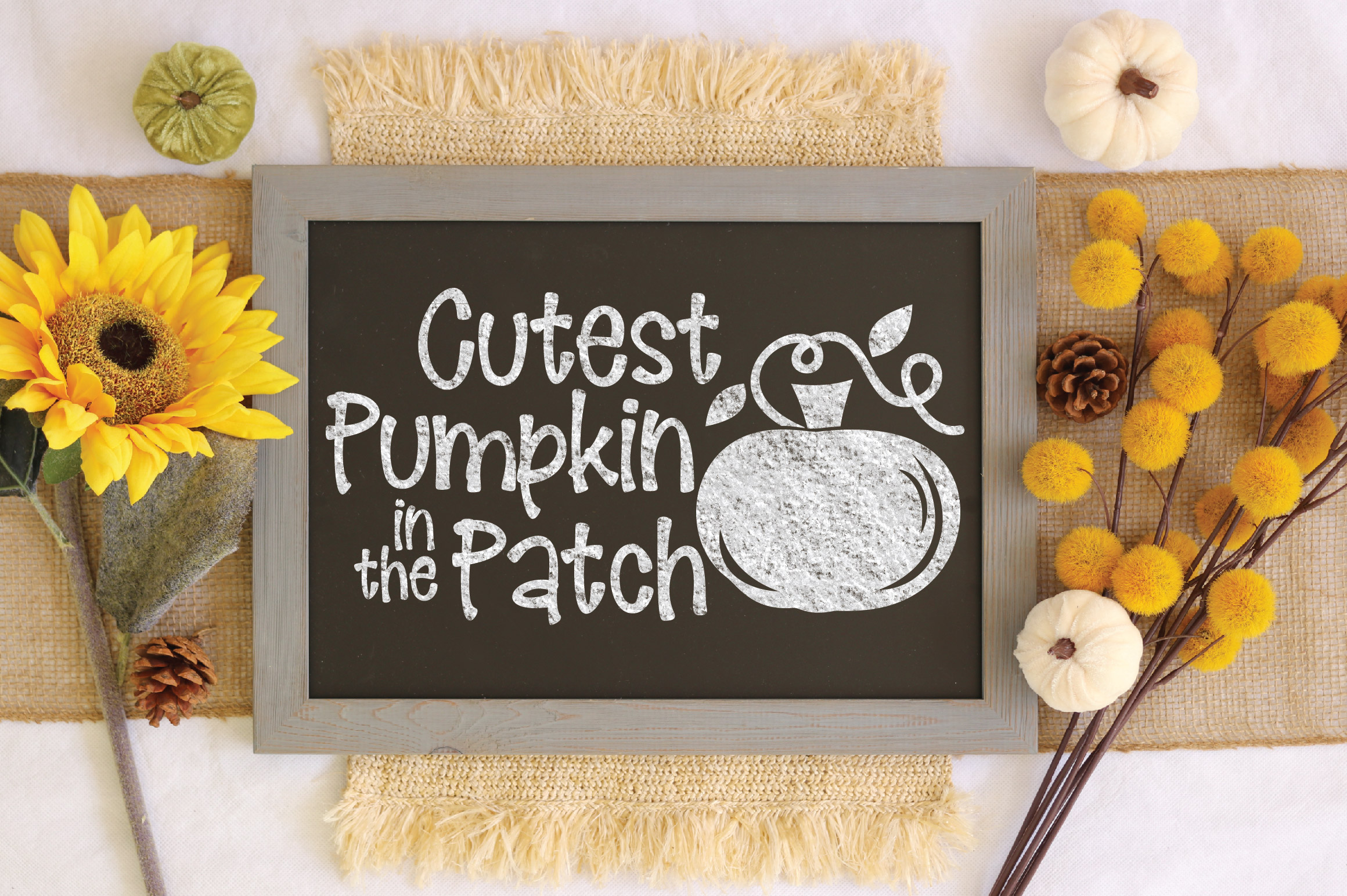 Cutest Pumpkin in the Patch SVG Cut File - Fall Pumpkin SVG example image 3