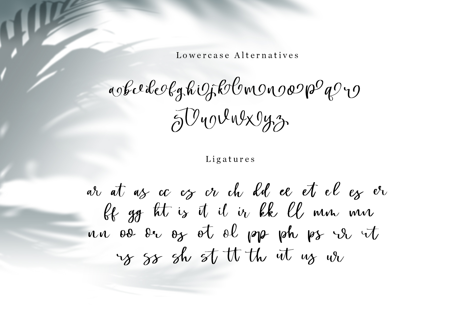 Swally - Brush Script Font example image 7