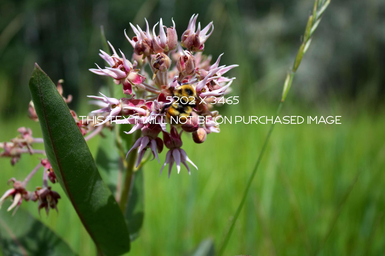 Botanical Photo Bundle, Large Nature Photos example image 3