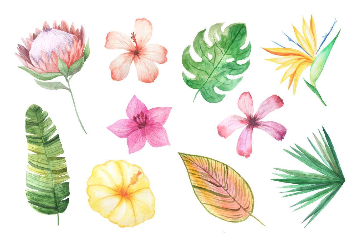 Watercolor Exotic Flowers Mini Set example image 2
