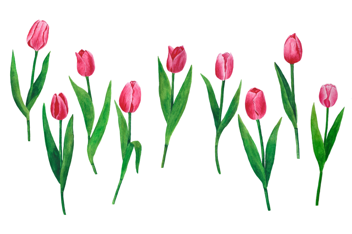 Flowers Tulips Watercolor example image 7