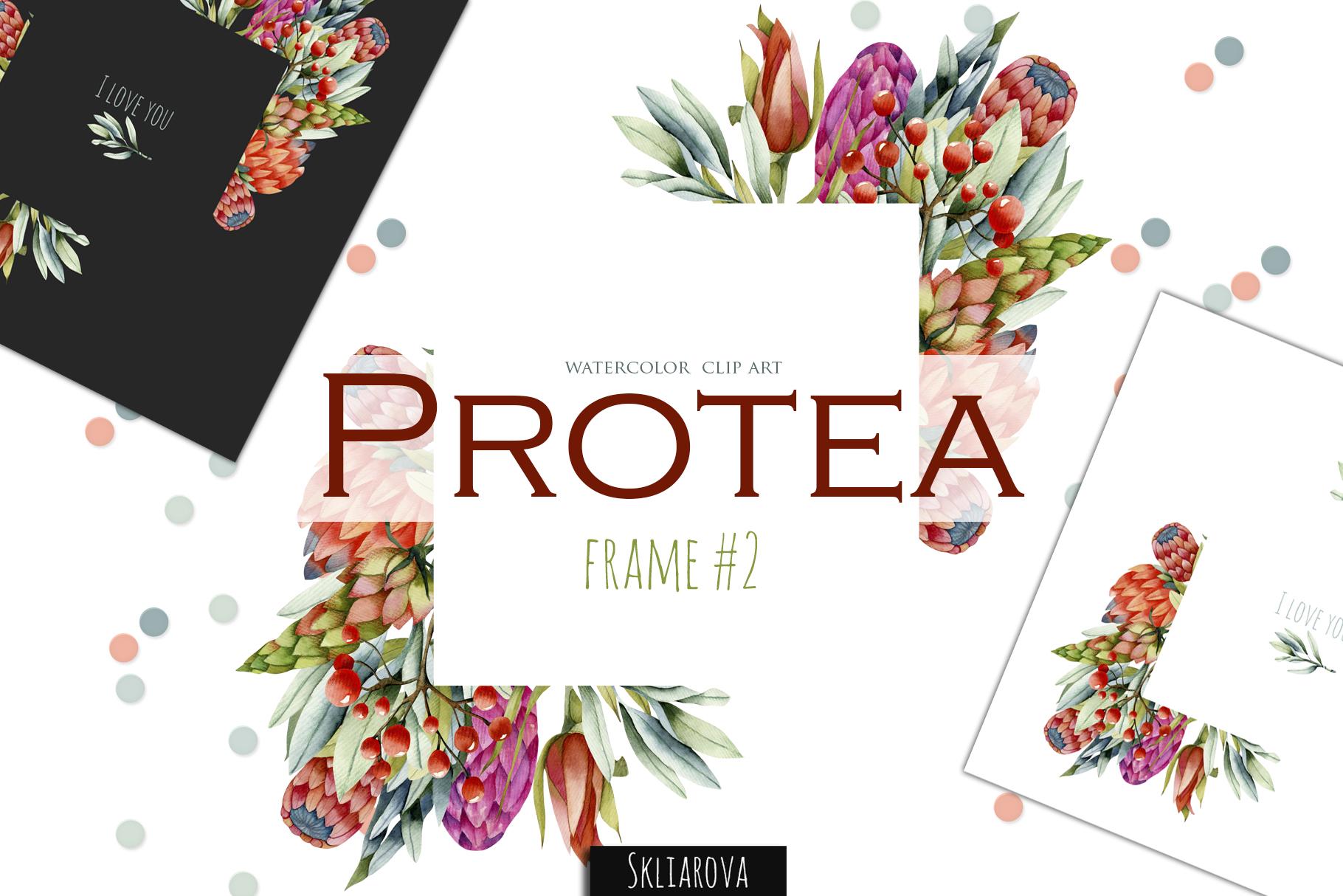 Protea. Frame #2 example image 1