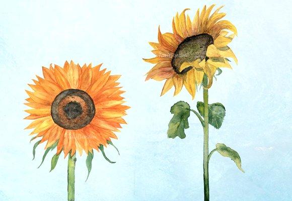 2 JPG + 2 PNG Sunflower Clip Art example image 2