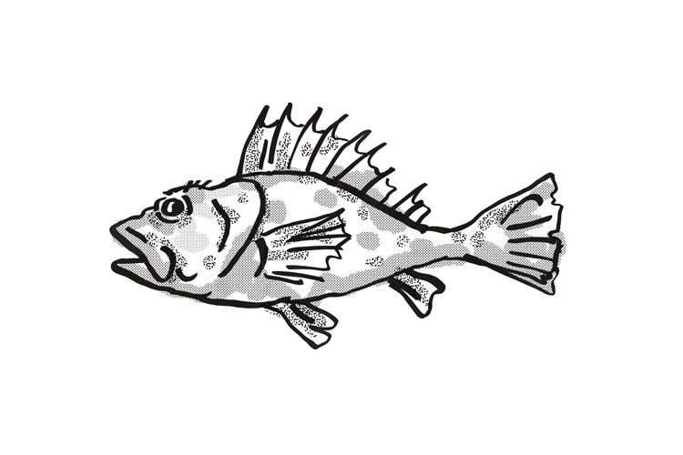 Western Scorpionfish Australian Fish Cartoon Retro Drawing example image 1