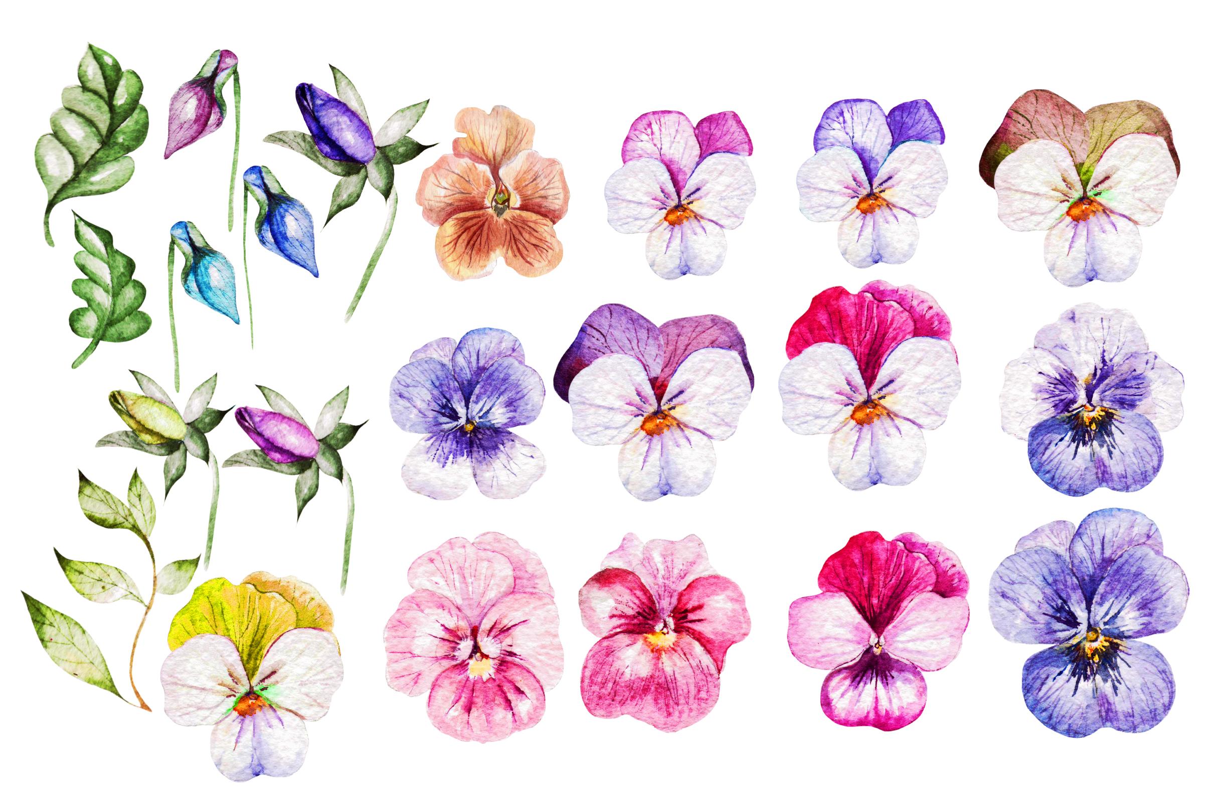 Watercolor PANSY FLOWERS example image 3