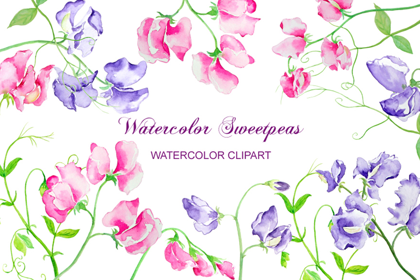 Watercolor Sweet Pea Pink and Purple Flowers Clipart example image 1