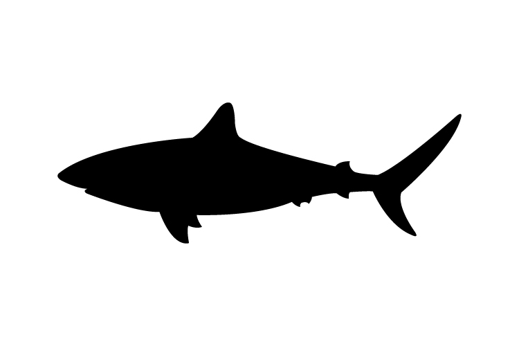 Shark icon example image 1