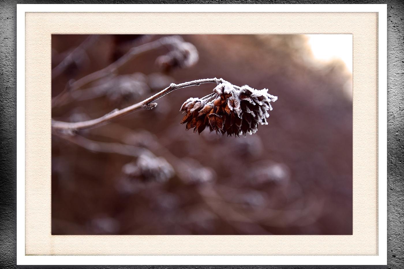 Nature photo, flora photo, twig photo, winter photo example image 3